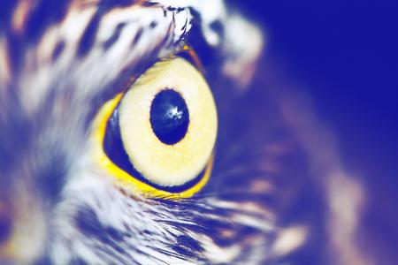 induce: eagle eye close-up, macro photo, vintage style color tone