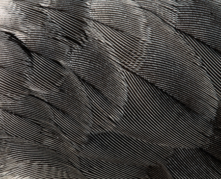 plumage background of bird closeup Reklamní fotografie