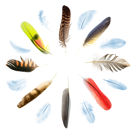 collection of bird feathers in the shape of circle Stock Photo