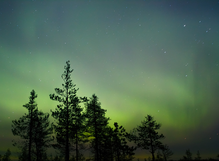 natural wonderful night nordic landscape, aurora borealis in a sky over the forest