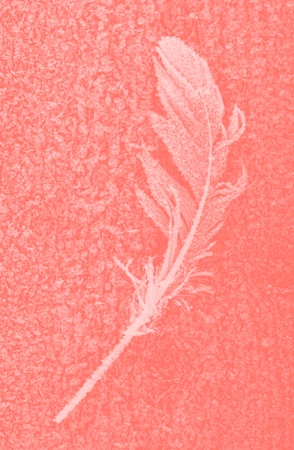 frozen bird feather closeup in a Living Coral tone Zdjęcie Seryjne