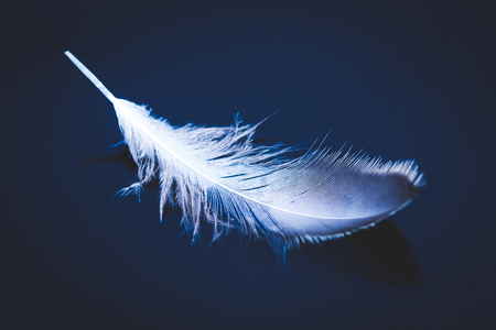 environment concept, downy feather on a water surface, blue color tone