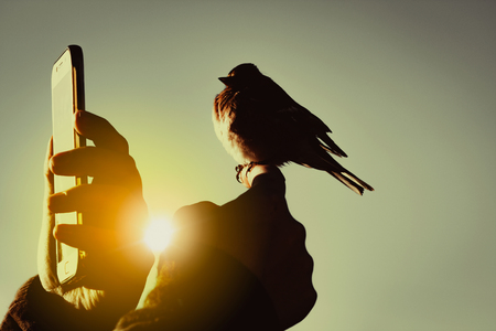 mobile photography concept, little bird on a human hand at sunrise