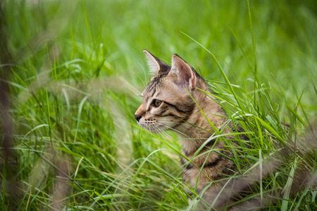 Cute kitten in the grass area was surveyed.