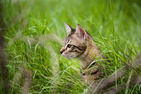 surveyed: Cute kitten in the grass area was surveyed.