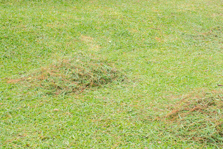 mow: Mow the grass in the front yard