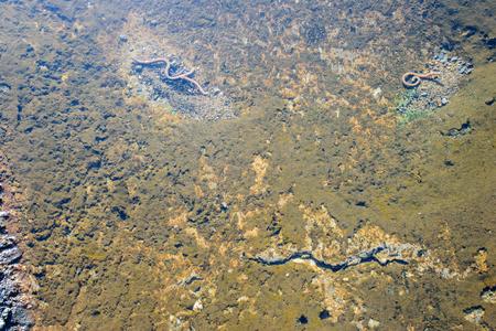 lombriz de tierra: gusano de la tierra en el agua