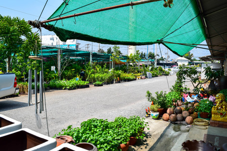 flower market: the plant and flower market
