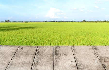 Wood floor and rice field photo