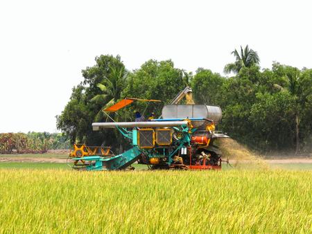 Combine Harvesters Cutting rice 版權商用圖片