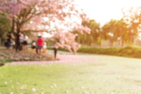 blured Pink trumpet tree .Tabebuia rosea.Landscape.Blurred filter effect.