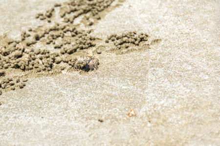 ghost crab created small sand ball while digging its burrow