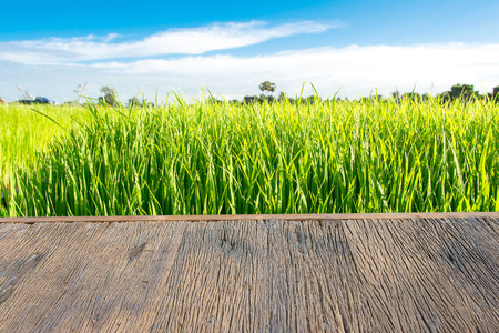 wooden terrace and  rice field landscape with blue sky