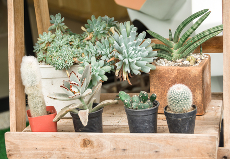 Different cactus small in pots on wood shell
