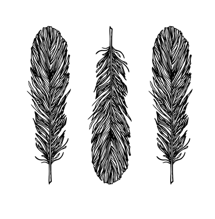feathering: vintage illustration - Feathers. Ink and feather Illustration