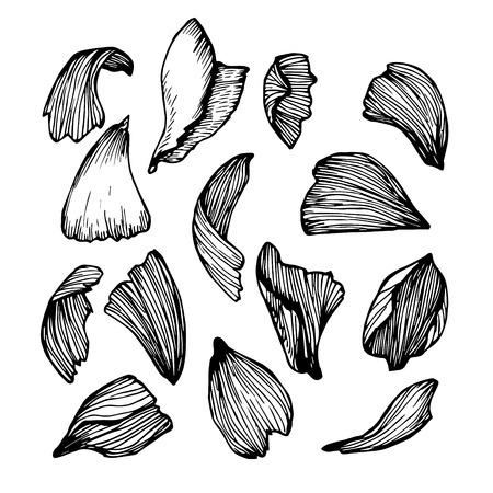 original single: Hand drawn vector illustration - Collection of rose petals.