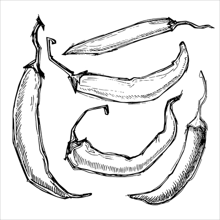 Hand drawn illustration - Hot chili peppers. Set. Isolated on white.