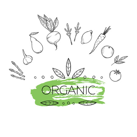 aromatic: Hand drawn vintage illustration - herbs and spices. Vector