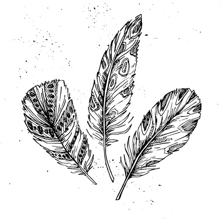 softly: Hand drawn vector vintage illustration - Feathers. Ink and feather