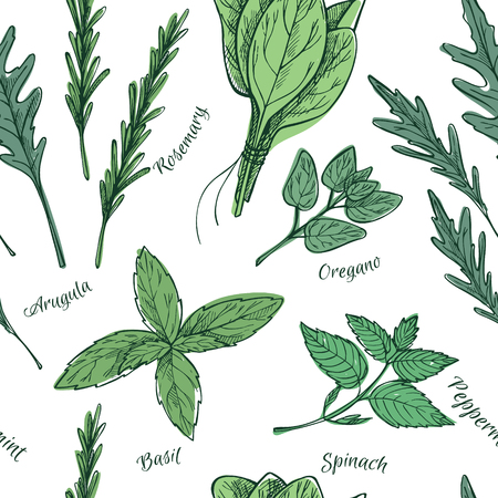 herb garden: Hand drawn vintage illustration - herbs and spices. Vector