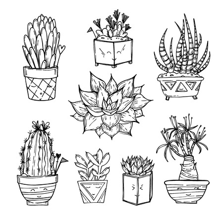 Hand drawn illustration - Set of cute cactus and succulents. Vector