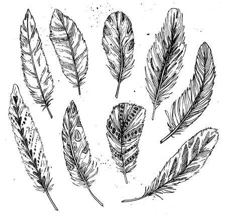 feathering: Hand drawn vector vintage illustration - Feathers. Ink and feather