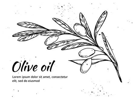 Hand drawn vector illustration - Olive branch. Olive oil. Vintage Illustration
