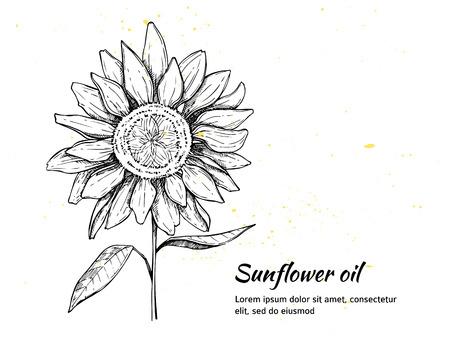 Sun flower: Hand gezeichnet Vektor-Illustration - Sonnenblumen Hintergrund. Jahrgang