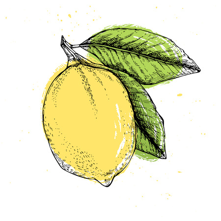 unfurl: Hand drawn vector illustration - Lemon
