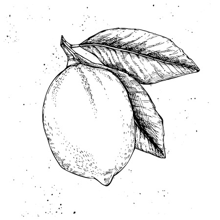 zest: Hand drawn vector illustration - Lemon
