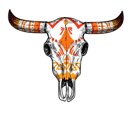 Hand drawn vector illustration - skull of animal. Vintage