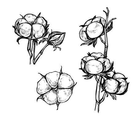 Hand drawn vector illustration - Set of cotton. Branch of cotton. Sketch Ilustração
