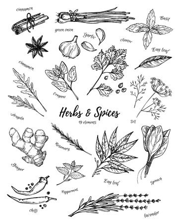 手描きビンテージ イラスト - ハーブやスパイス。ベクトル