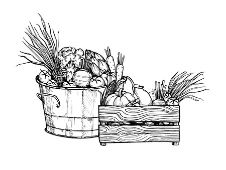 vegan food: Hand drawn illustration - Fresh vegetables. Supermarket. Grocery store. Organic and vegan food. Illustration