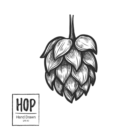 Illustration vectorielle dessinés à la main - Hop. Parfait pour le malt, la bière, la lager, le stout, les étiquettes, l'emballage, etc. Sketch design element. Fête de la bière