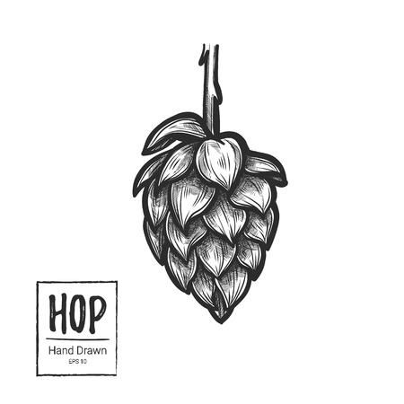 Hand getrokken vector illustratie - Hop. Perfect voor mout, aal, lagerbier, stout, labels, verpakkingen etc. Sketch design element. Bier feest Stock Illustratie
