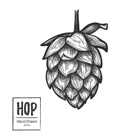 stout: Dibujado a mano ilustración vectorial - Hop. Perfecto para la malta, cerveza inglesa, cerveza dorada, cerveza de malta, etiquetas, envases, etc. elemento de diseño del bosquejo. Festival de la Cerveza Vectores