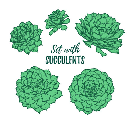 Hand drawn vector illustrations - set with succulents. Sketch on white background. Perfect for Wedding invitation, greeting card, poscard, poster, textile etc. Illustration