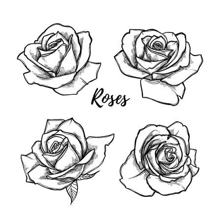 Dibujado a mano ilustración vectorial - conjunto de rosas. Bosquejo floral del tatuaje. Perfecto para tatuajes, invitaciones, tarjetas de felicitación, citas, blogs, carteles, etc. Colección Vintage