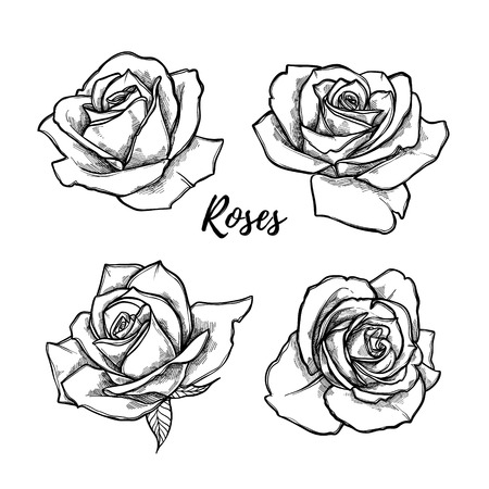 Hand drawn vector illustration - set of roses. Floral Tattoo sketch. Perfect for tattooing, invitations, greeting cards, quotes, blogs, posters etc. Vintage collection