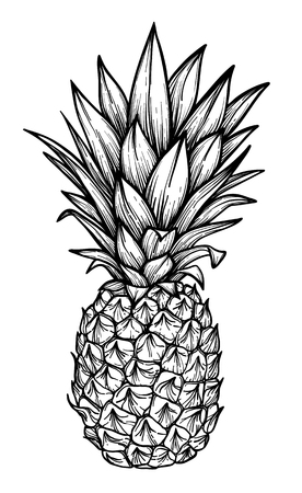 Hand drawn vector illustration - Pineapple. Exotic tropical fruit. Sketch. Outline. Perfect for tattooing, invitations, greeting cards, blogs, posters etc.
