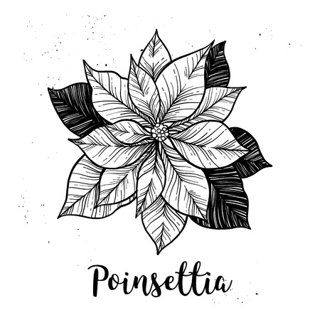 Hand drawn vector illustration - Poinsettia. Christmas Flower. Sketch. Outline. Perfect for invitations, greeting cards, blogs, posters etc.
