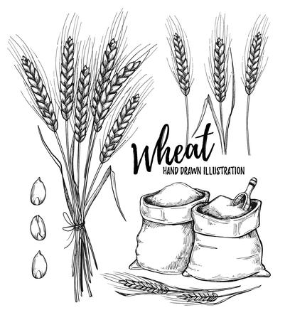 Dibujado a mano ilustración - trigo. Elementos de diseño tribales (sacos con harina y trigo). Perfeccione para las invitaciones, las tarjetas de felicitación, los carteles, las impresiones Ilustración de vector