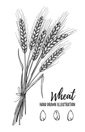 Hand drawn illustration - Wheat. Tribal design elements. Perfect for menu, cards, posters, prints, banners