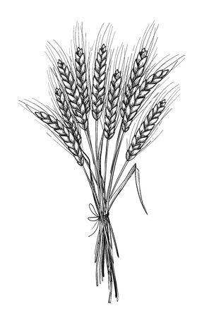Hand drawn illustration - Wheat. Tribal design elements. Perfect for menu, cards, posters, prints Vector Illustration