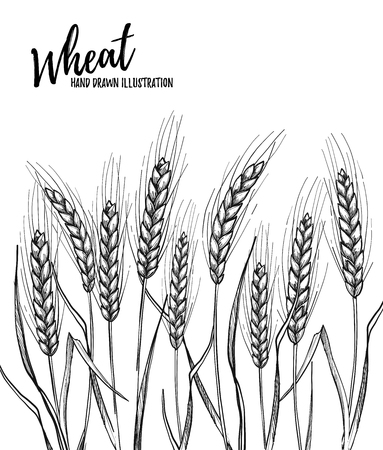Hand drawn  illustration - Wheat. Tribal design elements. Perfect for menu, cards, posters, prints Illustration