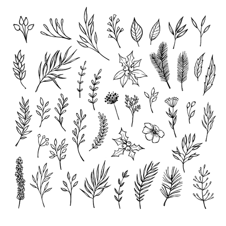 laurel leaf: Hand drawn winter elements ( laurel, frame, leaf, poinsettia, holly, fir and pine branches, berry, flower, plant, twigs). Christmas design elements. Perfect for invitations, greeting cards, posters, prints, scrapbooking Illustration