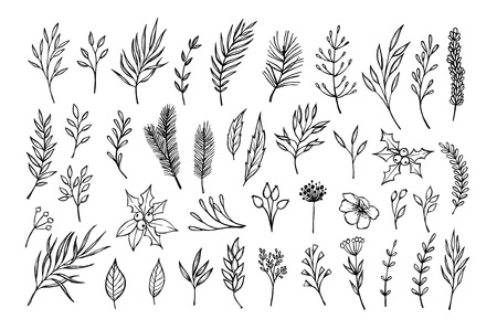 laurel leaf: Hand drawn winter elements ( laurel, frame, leaf, poinsettia, holly, fir and pine branches, berry, flower, twigs). Christmas design elements. Perfect for invitations, greeting cards, posters, prints