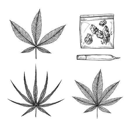Hand drawn vintage vector illustrations - Medical cannabis (Indica, ruderalis, sativa). Marijuana sketch.