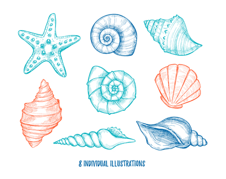 Hand drawn vector illustrations - collection of seashells.  Marine set. Perfect for invitations, greeting cards, posters, prints, banners,  etc